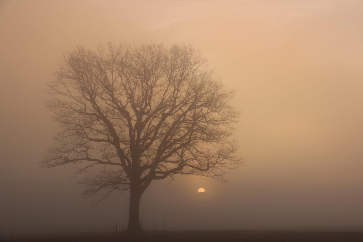 Sein wie ein Baum (Psalm 1)